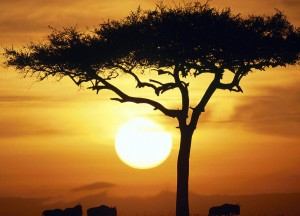 Загадочная Африка