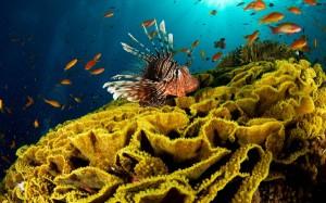 Красота подводного мира Красного моря